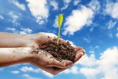 Växthavre i hand Arkivbild