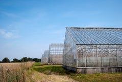 växthus Arkivfoto