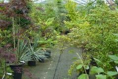växthus Royaltyfri Bild
