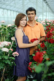 växthus Royaltyfri Foto