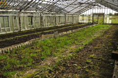 växthus Royaltyfri Fotografi