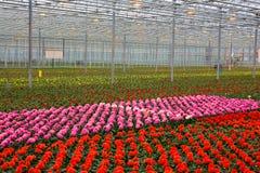växthus arkivbild