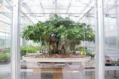 Växthus Denver Botanical Gardens Royaltyfri Fotografi