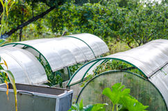 Växthus eller burk på trädgården Royaltyfri Foto