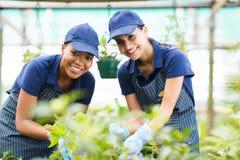 Växthus för två trädgårdsmästare royaltyfri foto