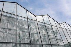 Växthus i botanisk trädgård glass fasad med trädreflecti Royaltyfria Foton