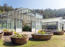 Växthus i botaniska trädgårdar för drottning Sirikit, Chiang Mai Provin Royaltyfria Bilder