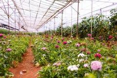 Växthus i Dalat Arkivbild