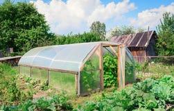 Växthus i trädgårds- sommar royaltyfria bilder