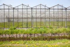 Växthus i Westland i Nederländerna Royaltyfria Bilder