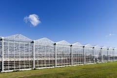 Växthus i Westland i Nederländerna Arkivfoto