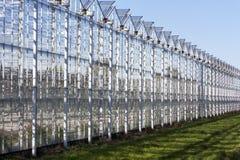 Växthus i Westland i Nederländerna Royaltyfri Foto