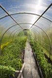 växthus inom Arkivbild