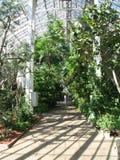 växthus inom Arkivfoto
