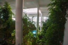 Växthus inom byggnaden, med en pölinsida bland vegetationen arkivfoton