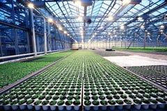 Växthus med plantavåren fotografering för bildbyråer