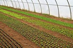 Växthus med plantor Royaltyfri Fotografi