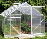 Växthus med tomatväxter Royaltyfri Foto