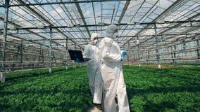 Växthus och forskare som promenerar det och observerar växter lager videofilmer