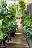växthus Olika växter, blommor, seedlingl och krukor Royaltyfri Fotografi