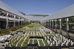 växthus två Arkivbilder