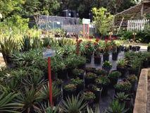 Växthusdrivhusblommor royaltyfri foto