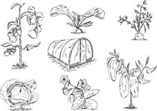 växthusgrönsaker Arkivfoto