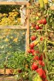Växthushöst Royaltyfria Bilder