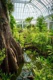Växthusinre royaltyfria bilder