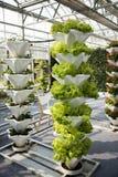 Växthusodling Royaltyfri Foto