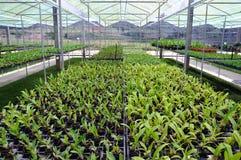 växthusorchidplanta Arkivfoto