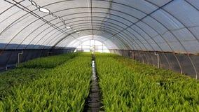 Växthusormbunkar Royaltyfri Foto