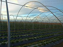 Växthusram i strålarna av inställningssolen arkivbild