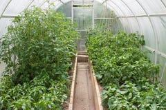 Växthussikt från insidan med växande växter Arkivbilder