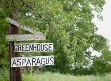 Växthussparris Fotografering för Bildbyråer