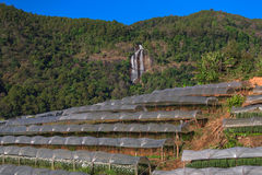 Växthusväxt, kungligt projekt, Doi Inthanon Arkivbilder