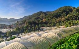 Växthusväxt, kungligt projekt, Doi Inthanon Royaltyfria Foton