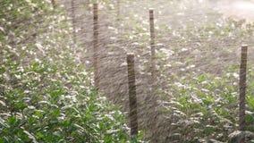 Växthusväxt, kungligt projekt, Doi Inthanon Royaltyfri Fotografi