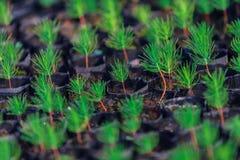 Växthusväxt, kungligt projekt, Doi Inthanon Fotografering för Bildbyråer