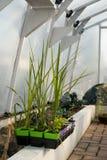 växthusvertical Arkivfoto