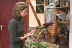 växthusworking Royaltyfri Foto