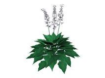 Växtillustration Royaltyfri Fotografi