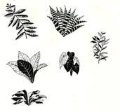Växtillustration Arkivfoto