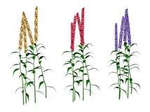 Växtillustrationer Fotografering för Bildbyråer
