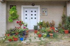 Växtingång Royaltyfria Bilder