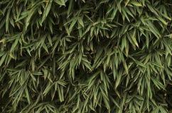 Växtkaskad Royaltyfria Foton