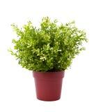 växtkruka Royaltyfri Fotografi
