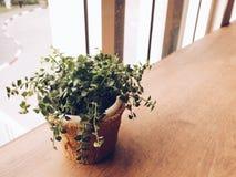 Växtkruka Fotografering för Bildbyråer