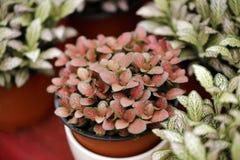 Växtkruka bland olik färg Arkivbild