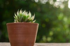 Växtkruka med kaktuns med grön bakgrund Fotografering för Bildbyråer